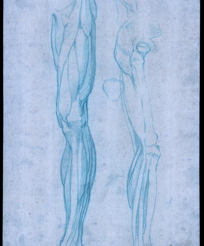 Músculos de la pierna posterior