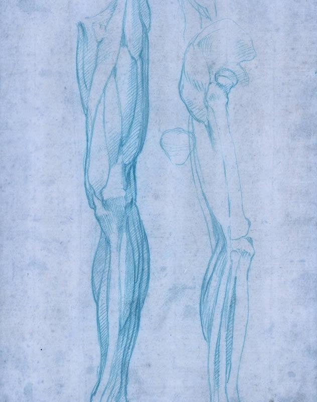Musculos de la pierna posterior